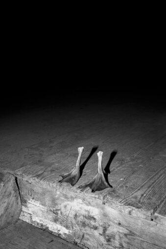 abgetrennte Gänsefüße stehen  auf einem Holzboden