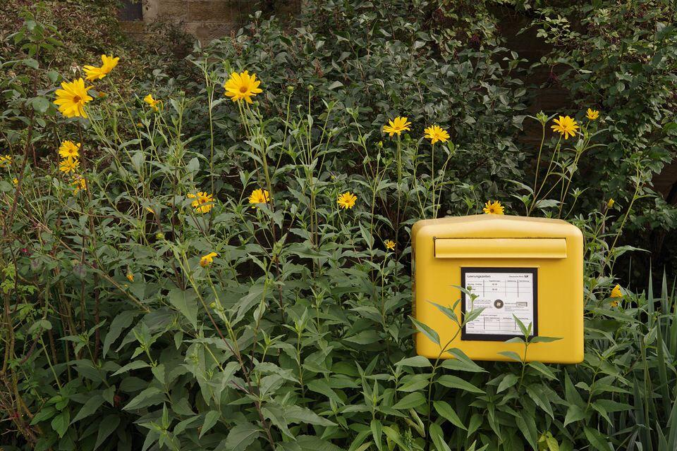 Gelber Briefkasten in einem Gebüsch mit gelben Blumen
