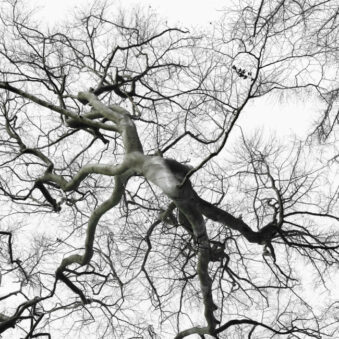 surrealer Baum