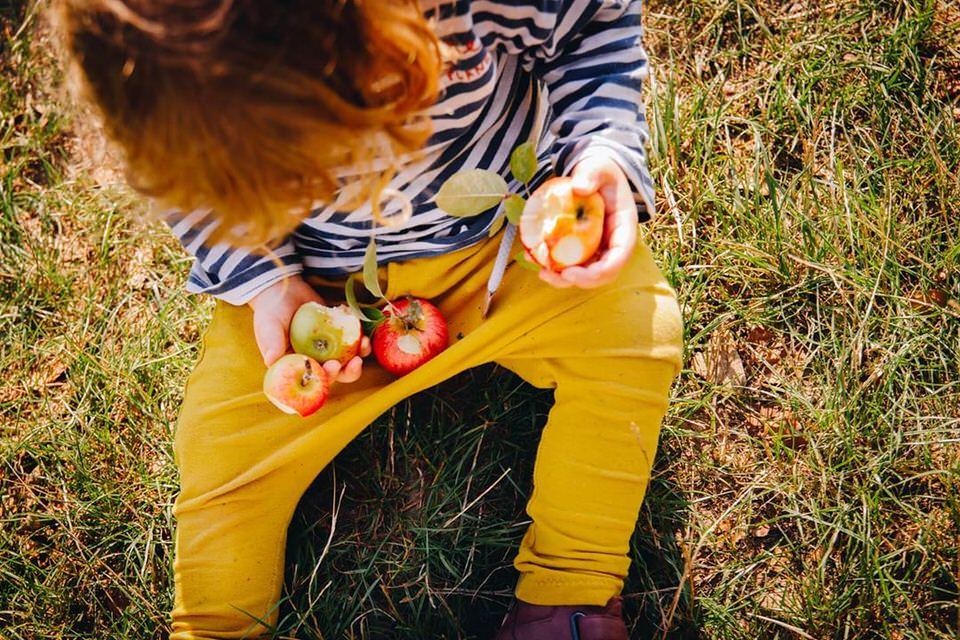 Kind in gelber Hose mit Äpfeln im Schoß