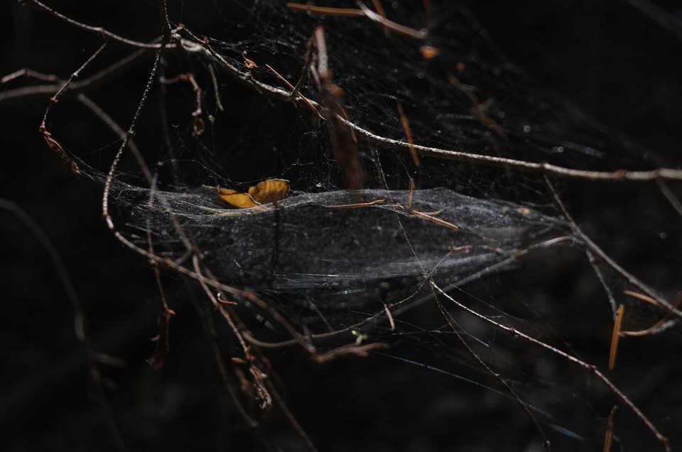 Spinnennetz in Zweigen