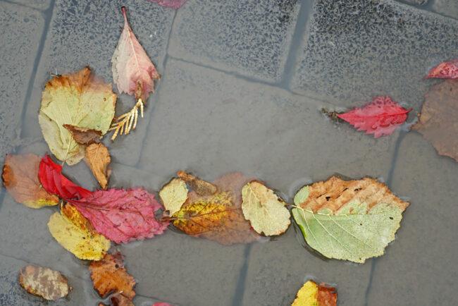 Bunte Blätter in einer Pfütze