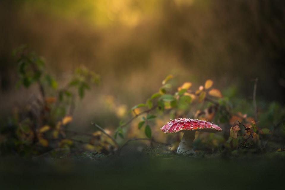 Ein Fliegenpilz im Wald