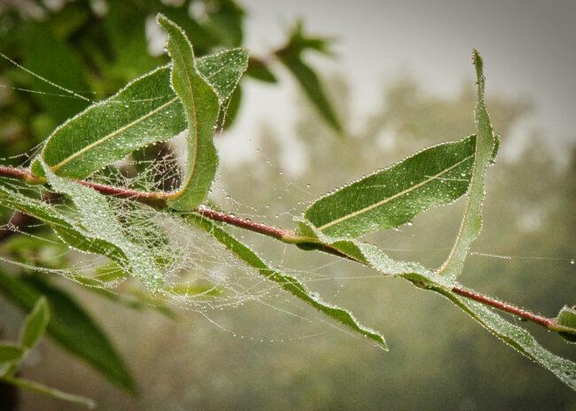 Spinnennetz zwischen Zweigen