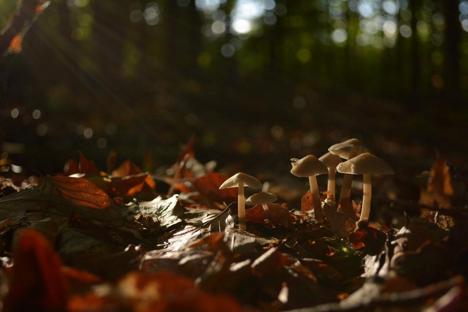 Pilte im Laubwald