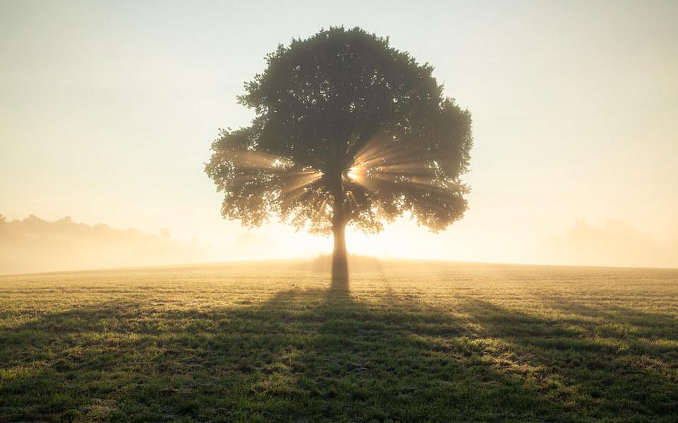 Ein einzelner Baum auf einem Feld, durch dessen Äste die Sonne bricht