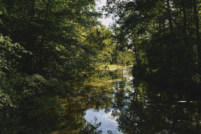 Blick auf einen Teich