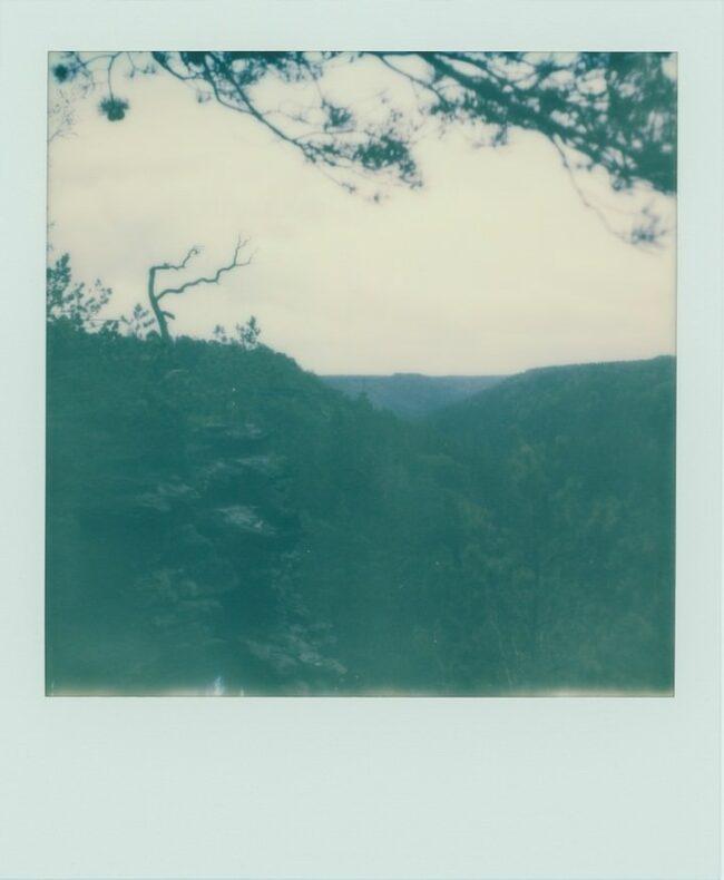 Polaroid eines Waldes