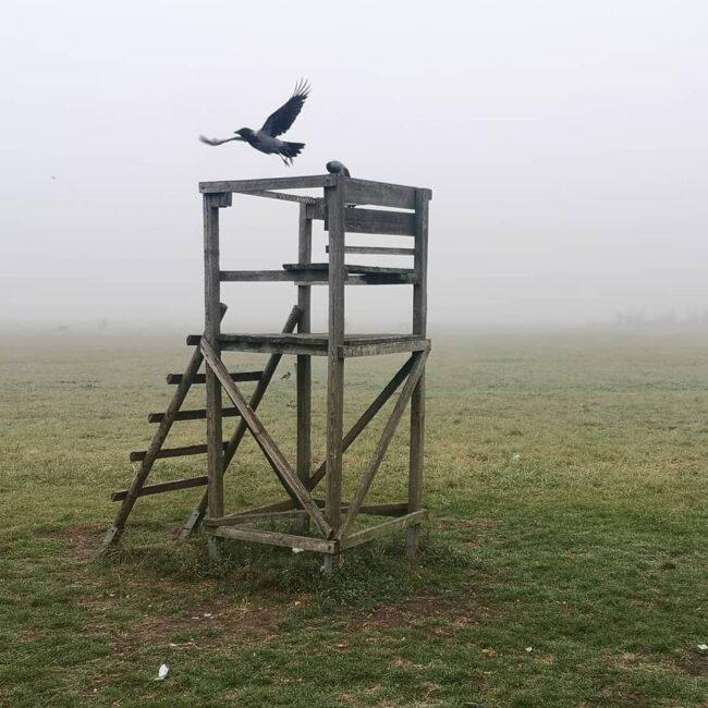 Vogel fliegt über einem Jagdstand