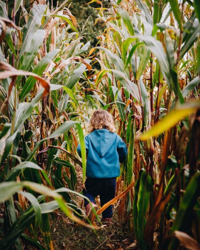 Kind läuft durch das Maisfeld