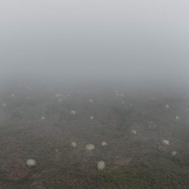 Wiese im Nebel