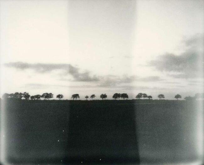 Feld mit Bäumen in schwarzweiß