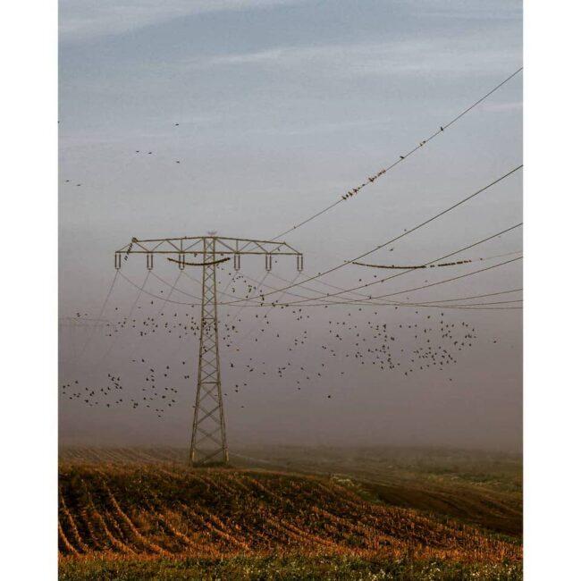 Strommast im Feld mit Vogelschwarm