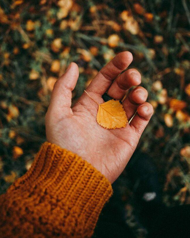 Hand hält ein gelbes Blatt