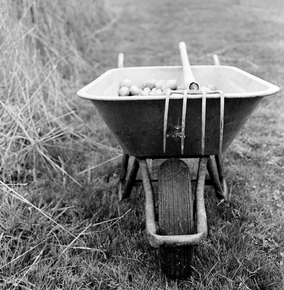 Schubkarre mit Heugabel auf dem Feld