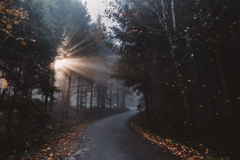 Licht bricht durch einen Wald