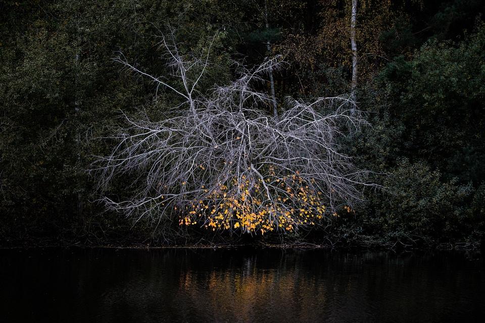 Wald am Ufer