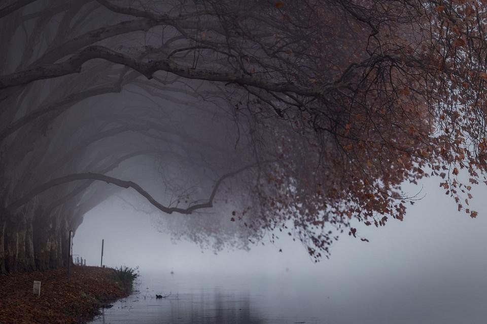Bäume im Nebel am Wasser