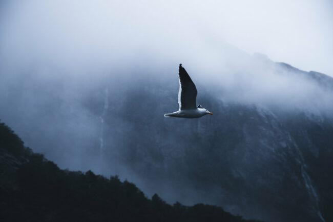Ein Vogel fliegt vor einer nebligen Landschaft