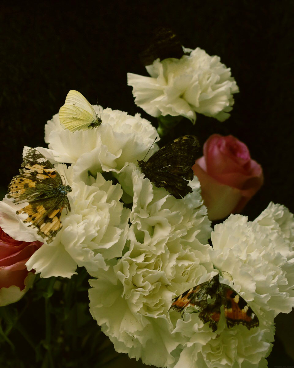 Blumen mit toten Schmetterlingen
