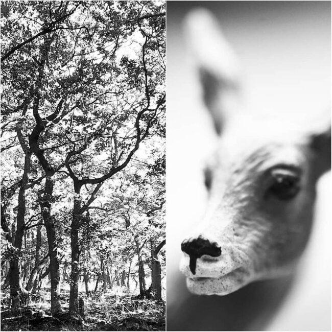 Reh und Wald