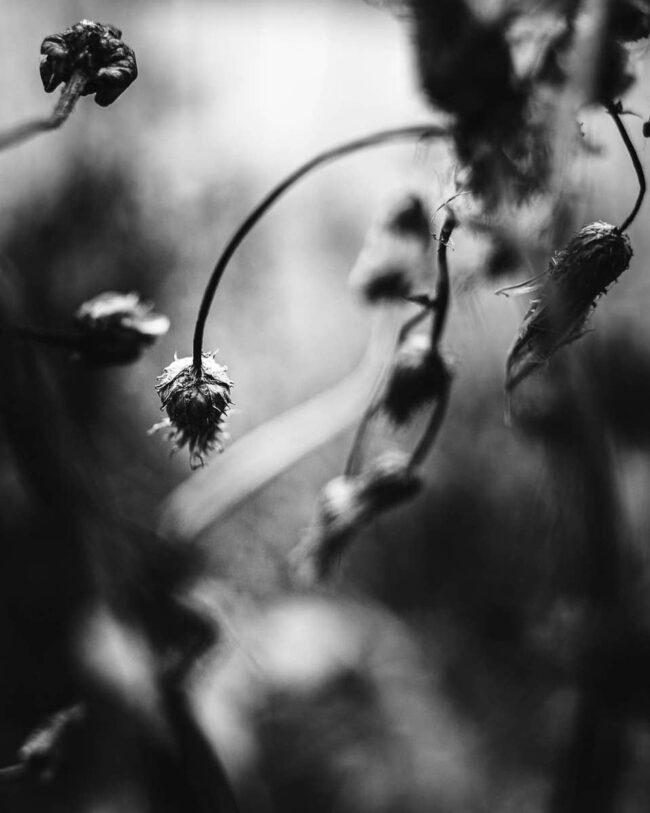 Alte Blüten