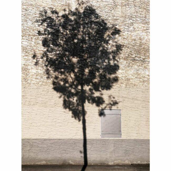 Baum vor einer Hauswand