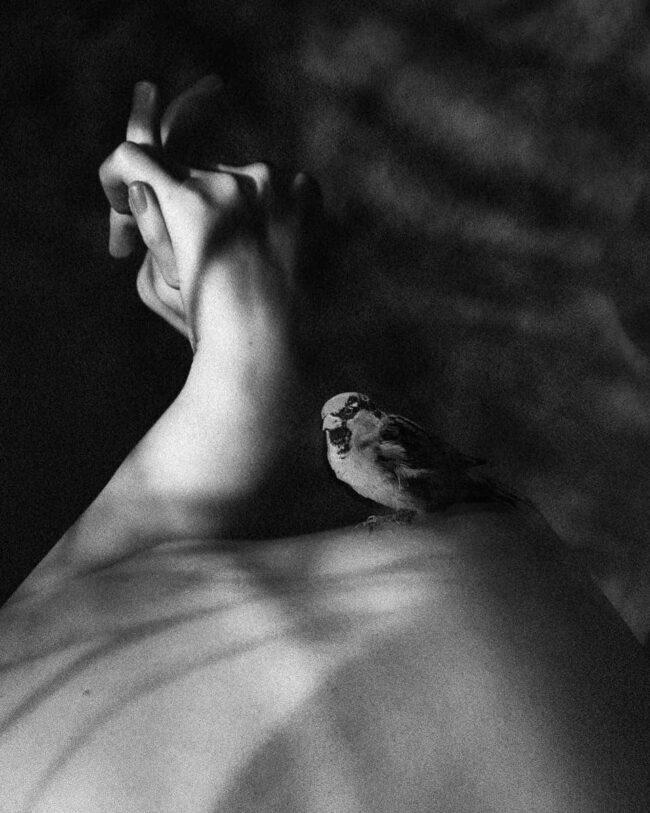 Vogel auf einem Rücken