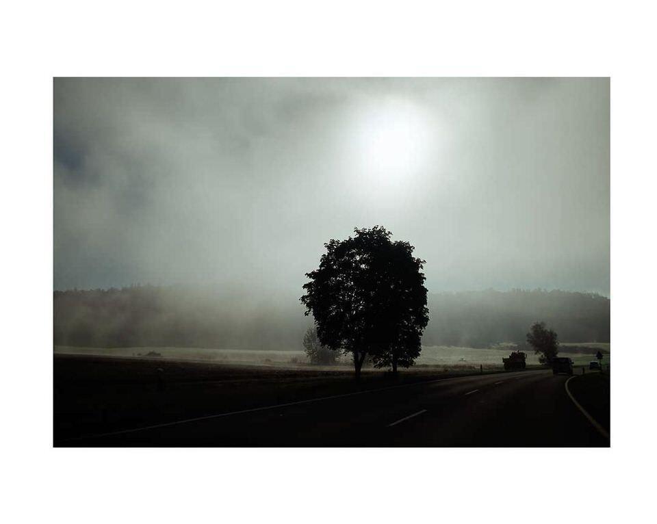 Einsamer Baum auf einem Feld