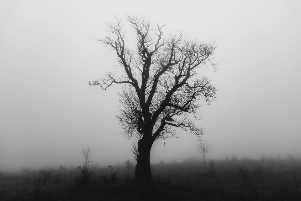 einsamer kahler Baum in schwarzweiß