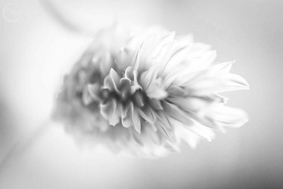 Blüte in Schwarzweiß