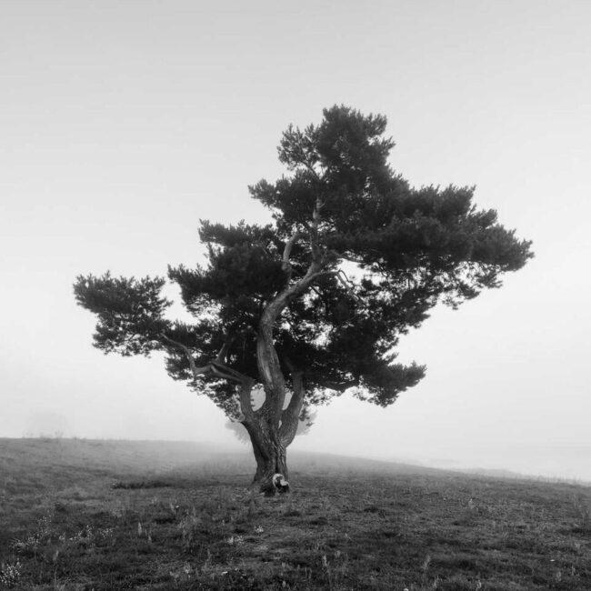 Einsamer Baum in Schwarzweiß