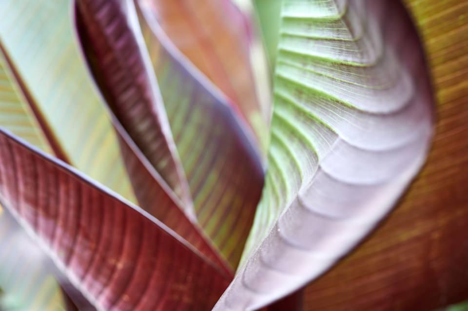 Detail Pflanze