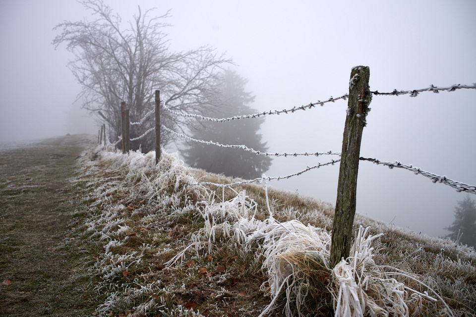 Feldzaun in Frost und Nebel