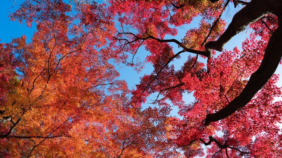 Bunt belaubte Baumkronen vor blauem Himmel