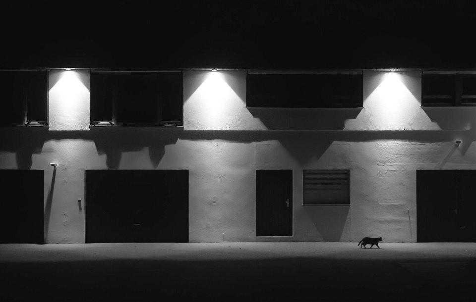 Katze läuft vor nachts beleuchteter Hausfassade