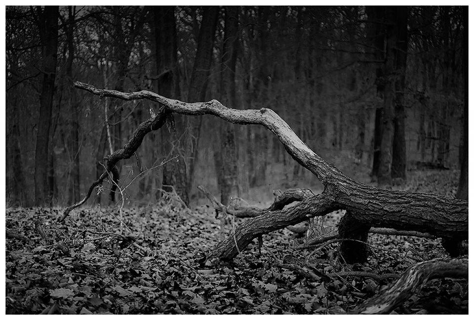 Kahler umgefallener Baum im Wald
