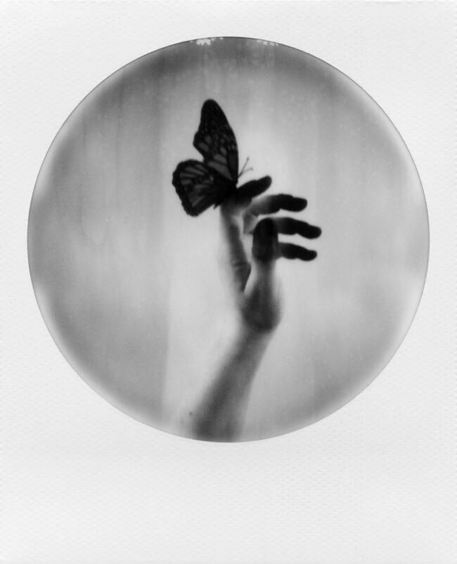 rundes Polaroid: Hand mit Schmetterling