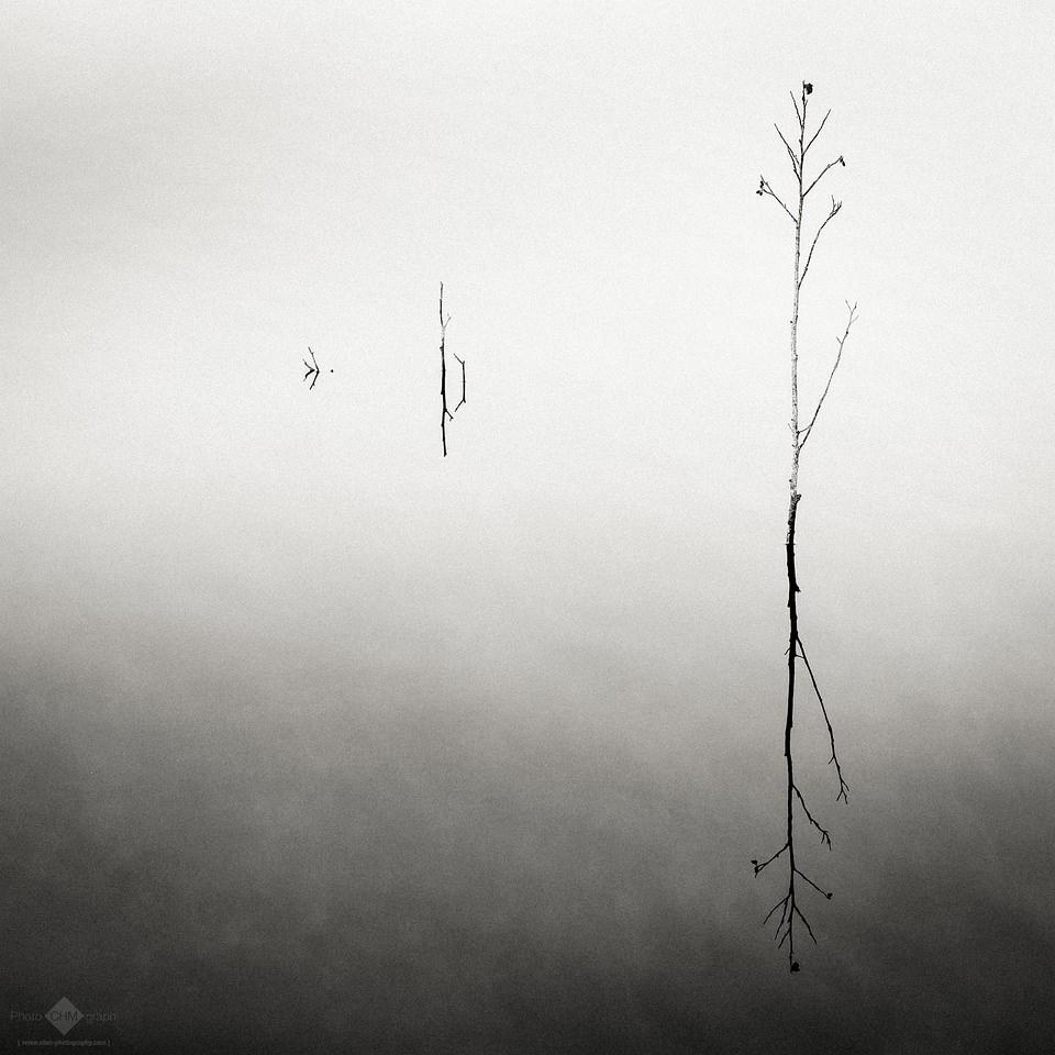 Pflanzen wachsen aus dem Wasser
