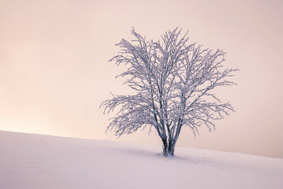 Schneelandschaft mit Baum