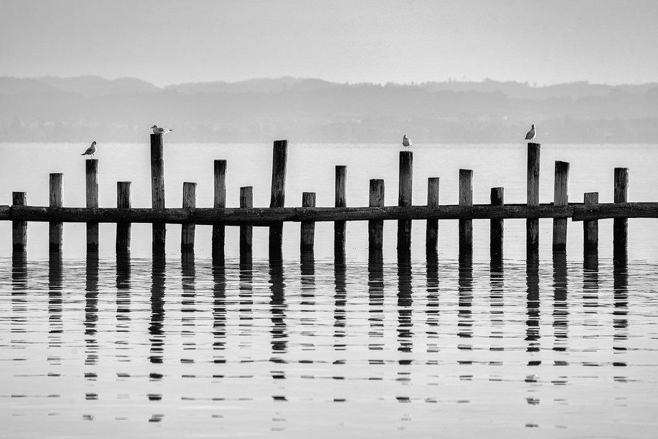 Möwen auf Holzpfeilern im Wasser