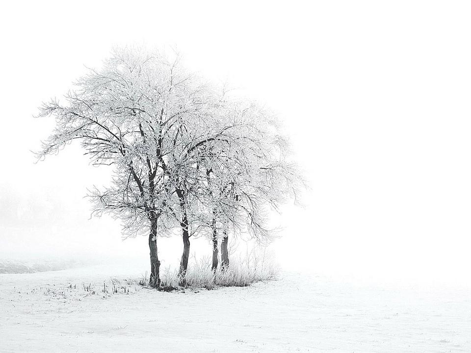 Schneelandschaft im Nebel
