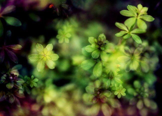 Makro grüne Pflanzen