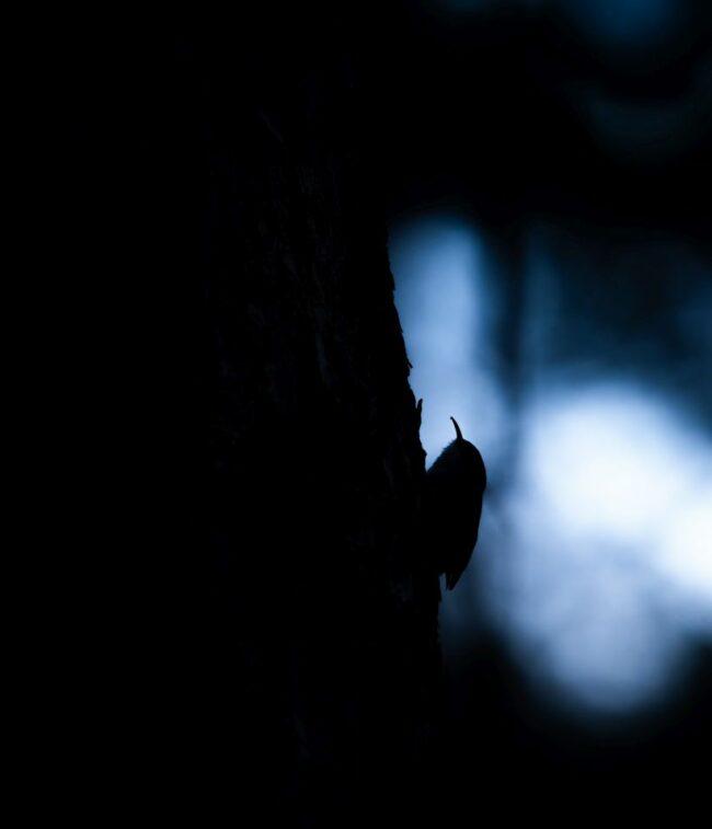 Silhouette eines Vogel an einem Baum