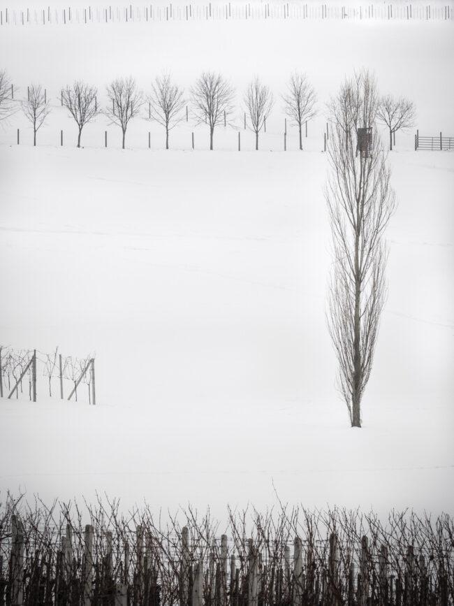 Schneebedeckte Wiese mit kahlen Sträuchern