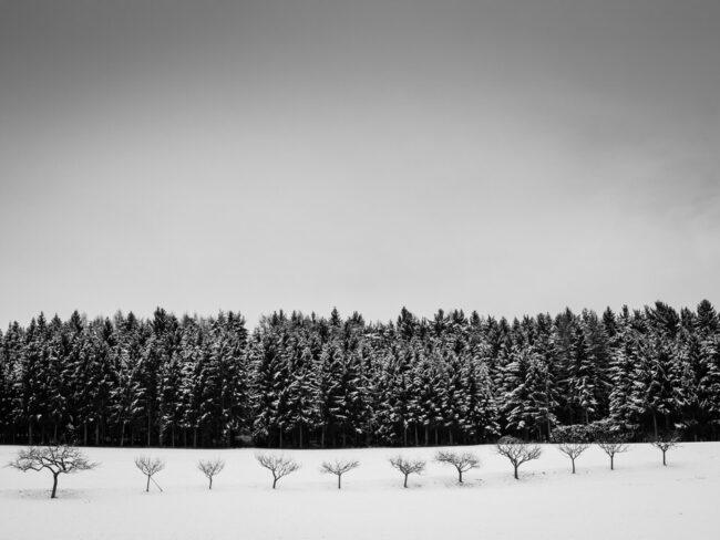 Waldrand vor einem schneebedecktem Feld