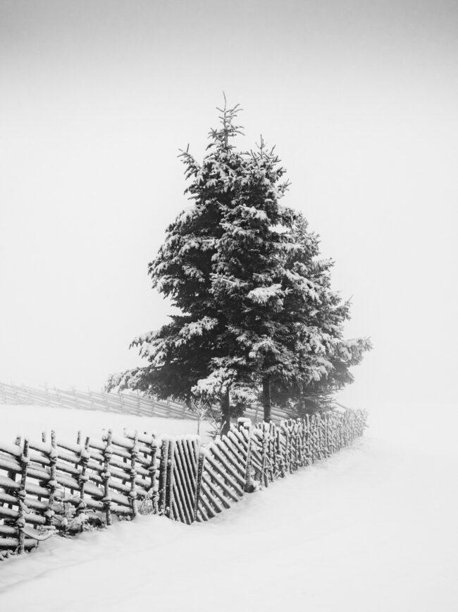 Bäume und Zaun im Schnee