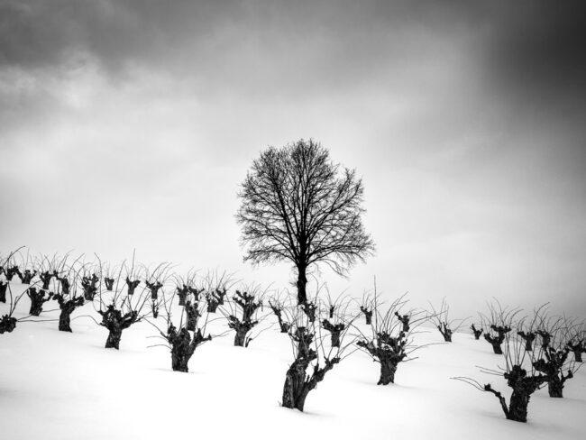 Schnee mit Sträuchern und einem Baum