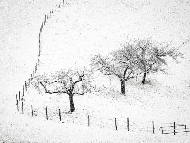 Kahle Bäume und ein Zaun auf einer schneebedeckten Wiese