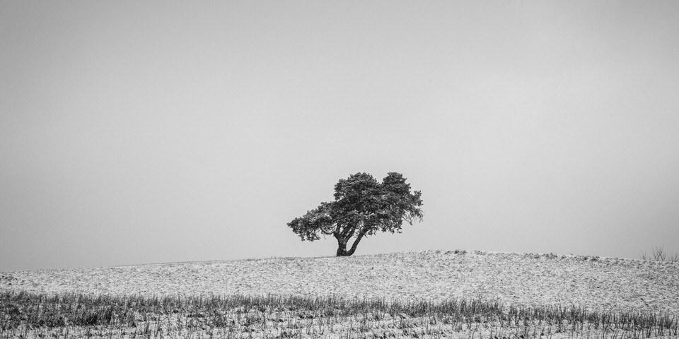 Baum auf einem schneebedeckten Feld